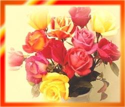 रंग विरंगी  फुलहरू