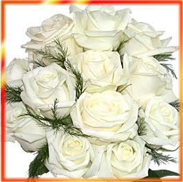 सेतो गुलाफहरू