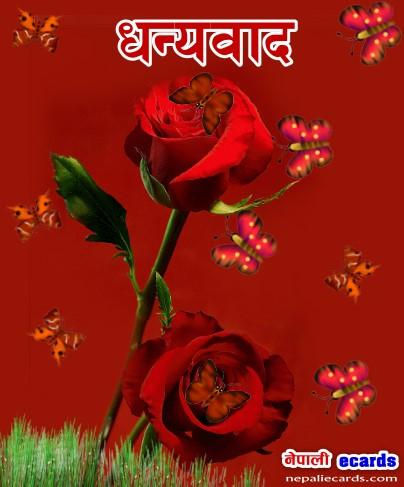 Create Thanks Ecards 187 धेरै धेरै धन्यवाद Its Free Nepali Ecards
